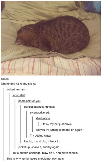 funny tumblr comment cat broke LOL