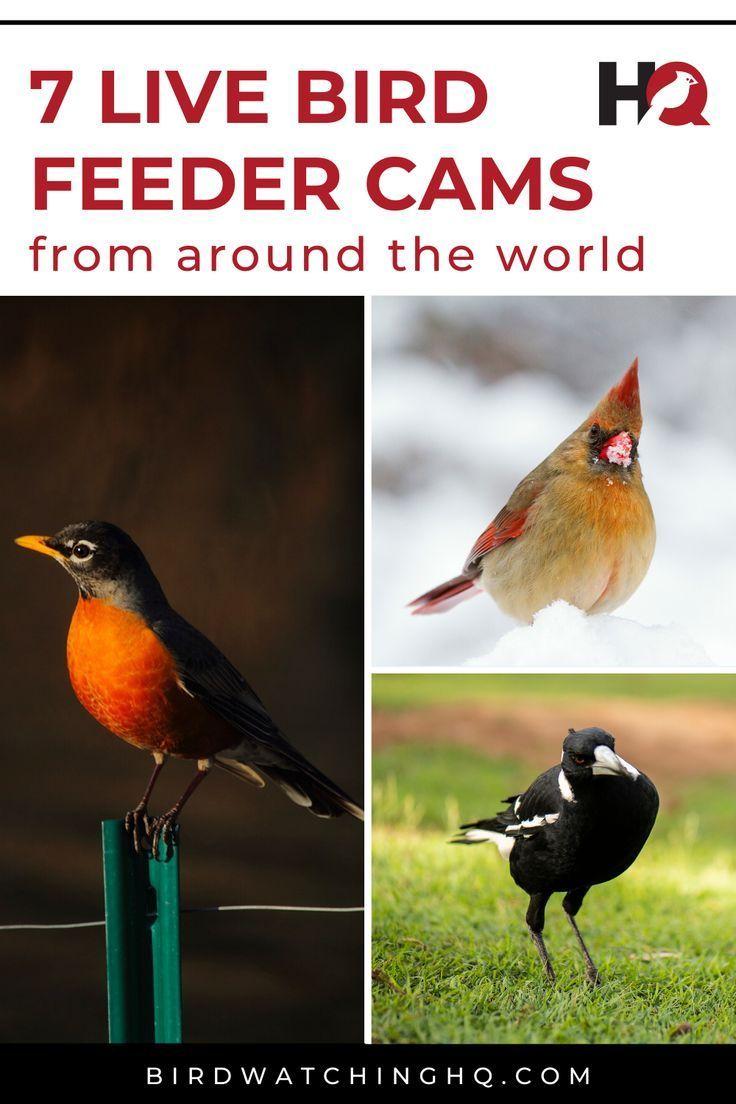 Bird Cam Live