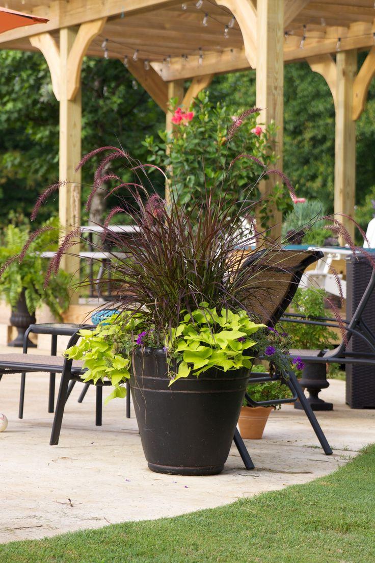 25 Beautiful Pool Plants Ideas On Pinterest Pool