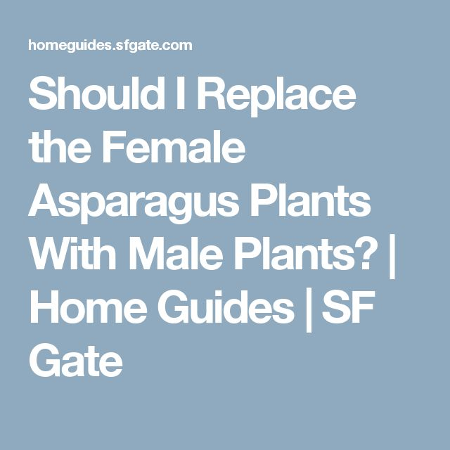 Should I Replace the Female Asparagus Plants With Male Plants? | Home Guides | SF Gate