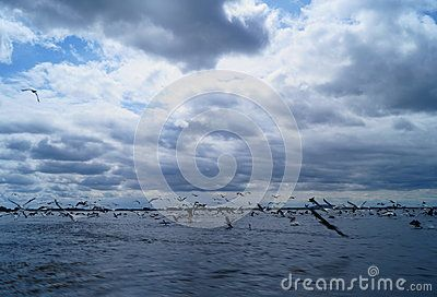 Pelican silhouetted on a blue sky with clouds