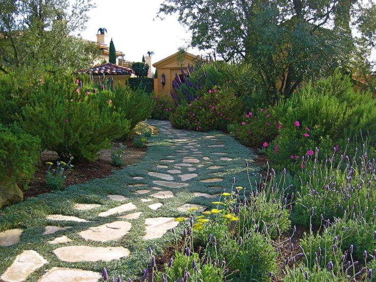 72 best Drought Tolerant Plant scapes images on Pinterest