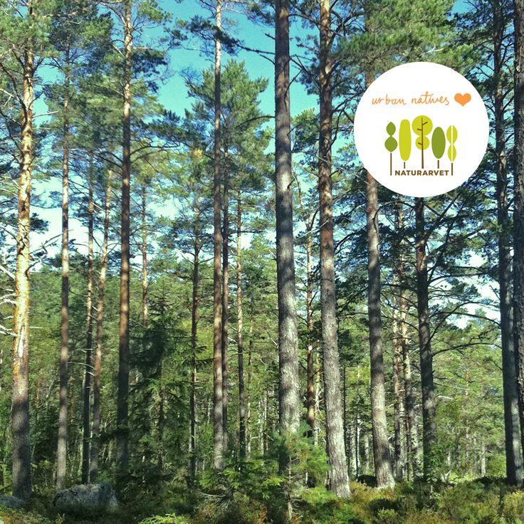 """Idag vill jag passa på och tipsa om Naturarvet som är en stiftelse där man vill bevara gammal, skyddsvärd skog i Sverige. Helt utan vinstintresse bara """"pure love"""". Istället för att köpa strumpor till pappa på Fars dag den 10 november, köp ett träd. Om du inte gillar shopping gå in och klicka för Igglekärr (sponsrat klick). Det gör du här: http://naturarvet.se/"""