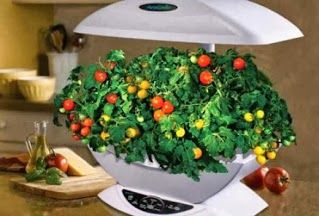 58 Best Images About Hydroponic Gardening On Pinterest 400 x 300