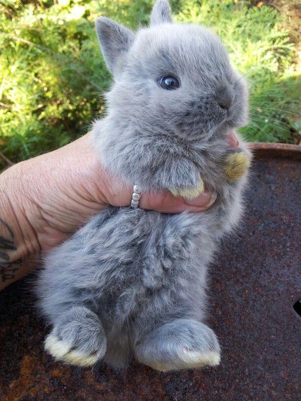 Tiny bunny...