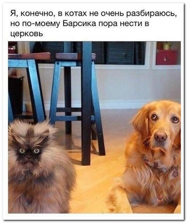 Фото приколы юмор и смешные картинки. Смешные комментарии из социальных сетей (30 фото)