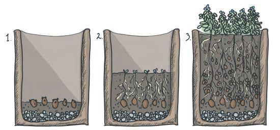 die besten 25 kartoffeln anbauen ideen auf pinterest kartoffelanbau gr ne kartoffeln und. Black Bedroom Furniture Sets. Home Design Ideas