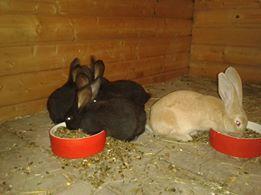 Knuffel konijnen op de camping!