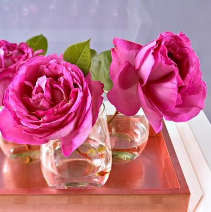 The 25+ best Single rose ideas on Pinterest | Rose in a glass ...