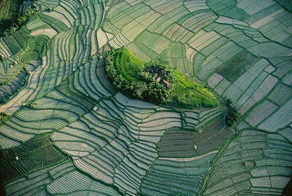 Insulita intre terasele de orez in Bali, Indonesia