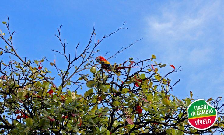 Hasta las exóticas aves tienen el atractivo de visitar nuestra ciudad, haciendo honor a la transformación y cambio, porque en #Itagüí se vive mejor.