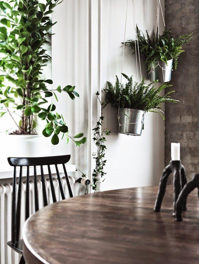 The Design Chaser: Indoor Plants | Fresh Ideas