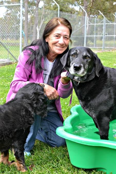 BETTER LIFE: Golden Oldies Animal Rescue foster carer Margaret South with rescue dogs Ivy and Jed. Golden Oldies is seeking donations of paddling pools to help their older dogs cope with the upcoming summer temperatures.
