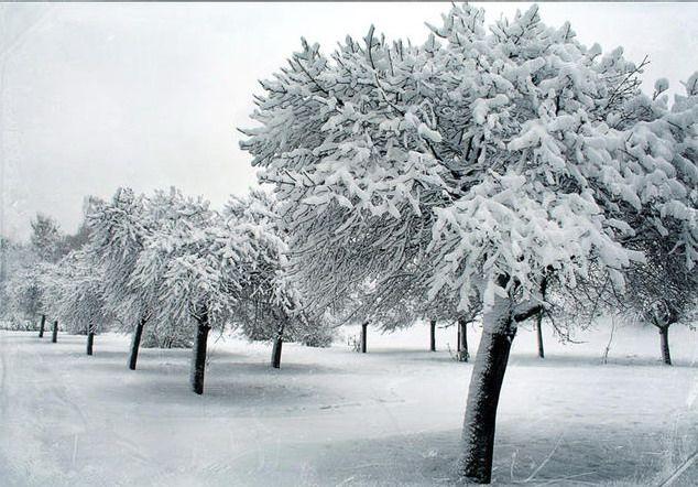 Les 337 meilleures images propos de mon jardin en for Jardin anglais en hiver