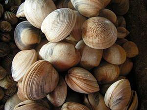 what causes shellfish allergy- shellfish allergy symptoms | Soy Allergy Symptoms
