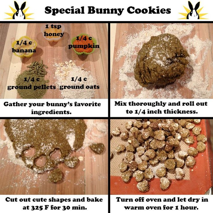House Rabbit Food Recipe