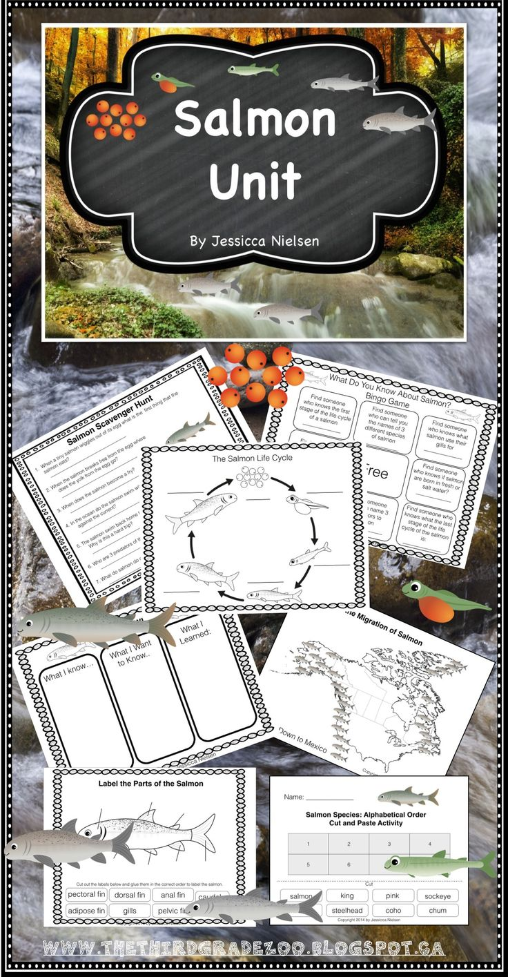 $This salmon unit contains 20 highly engaging and interactive activities including: a make your own salmon life cycle board game, a variety of cutting and pasting activities, and an end of unit quiz.