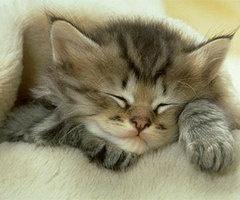 dreaming...Kitty Cat, Sleepy Kitty, Funny Cat, Sweets Dreams, Cat Naps, Naps Time, Kittens, Sleep Tight, Animal