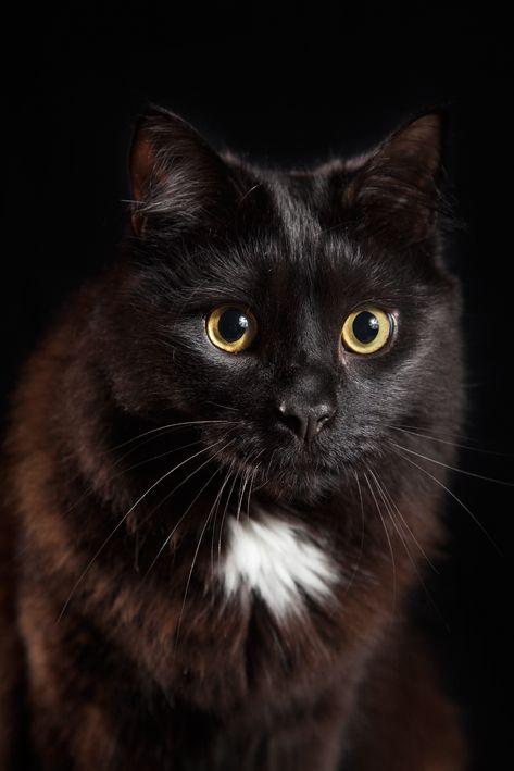 Attikus. Waiting for a treat. Black on Black. Portrait.