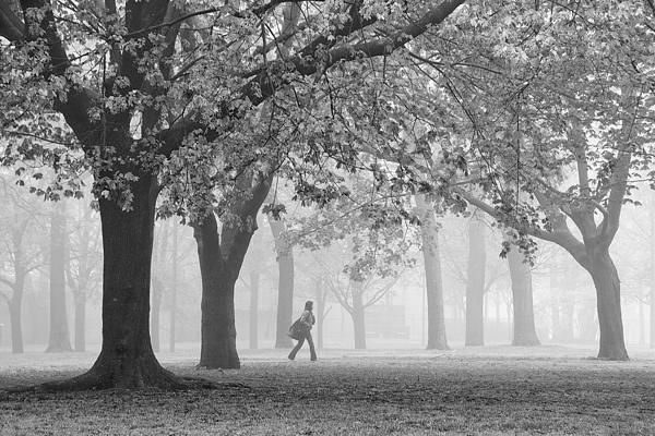 I love foggy mornings in Monarch Park. What I love about this photo is how the angle formed at this exact moment by the girl's legs mimics the angles formed by the trees on both edges of the image. There is also a great balance between the position of that girl and the two framing trees. A couple of years later, I shot a similar image, but without the girl and without the second prominent tree from the left, which had been felled by the remnants of Hurricane Sandy.  #fog, #trees, #walking