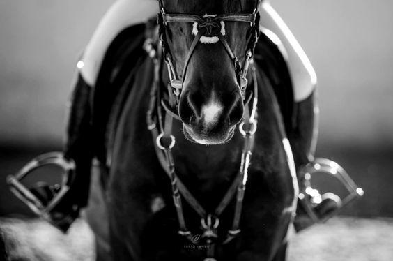 www.horsealot.com, the equestrian social network for riders & horse lovers | Equestrian Photography : Lucio Landa.