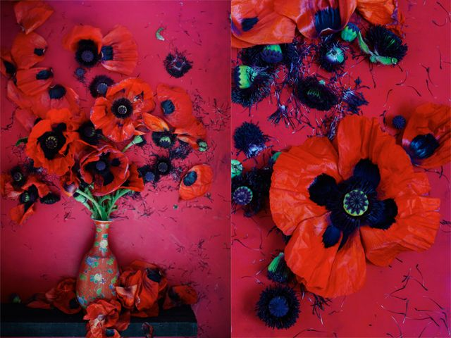 Striking images of poppies by Dietlind Wolf.