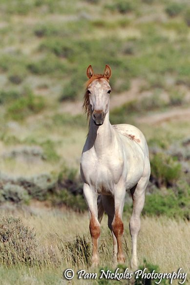 17 Best Ideas About Mustang Horses On Pinterest Wild