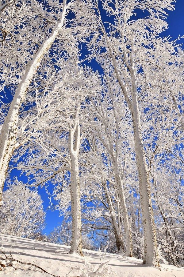 Spectacular Rime Frost on a cold January morning in the North Carolina Mountains