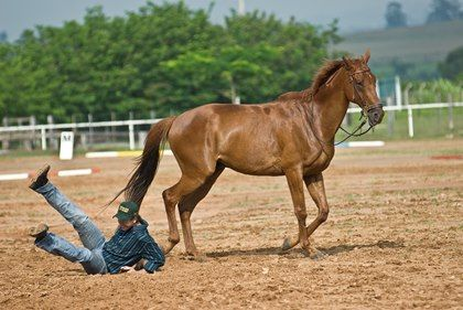 A lawyer describes equine liability insurance and what you should know about these policies.