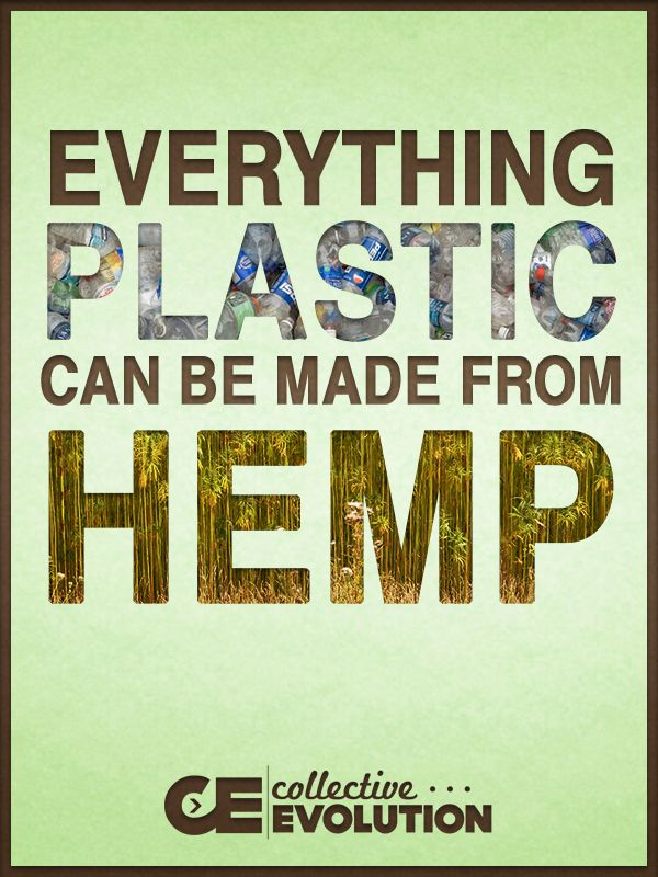 Everything plastic can be made from hemp.  Hemp plastic can completely replace oil based plastic materials that we are using today that contain large amounts of dangerous chemicals such as the very well known Bisphenol A. If all our plastics were made from hemp material you could literally purchase something that came in a plastic hemp container and then throw that container directly into the compost, as hemp plastics are completely biodegradable.