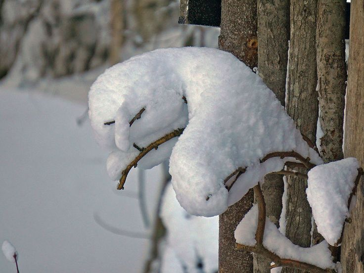 """Visa bild - """"Märklig snöskulptur som liknar fjälluggla"""" - Fotosidan"""
