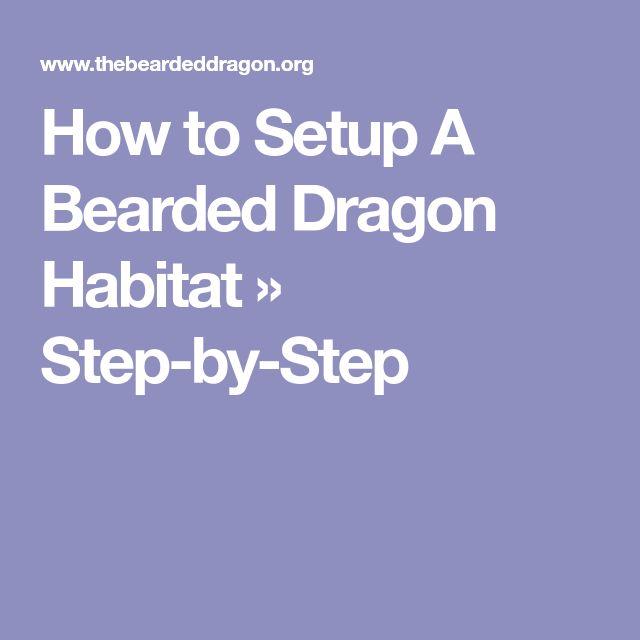 How to Setup A Bearded Dragon Habitat » Step-by-Step