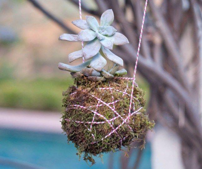 fioriera pendente piante grasse