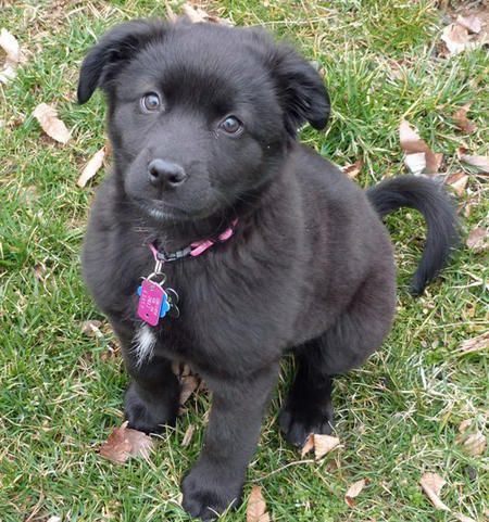 Cassidy the Border Collie Mix