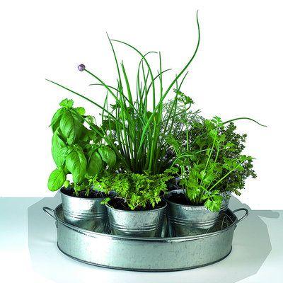 Pour les passionnés de plantes, mais ne possédant pas de jardin, ce plateau de Nature et Découverte propose de faire pousser sept aromates différents et complémentaires. Simple à cultiver, ces herbes possèdent des besoins en commun.