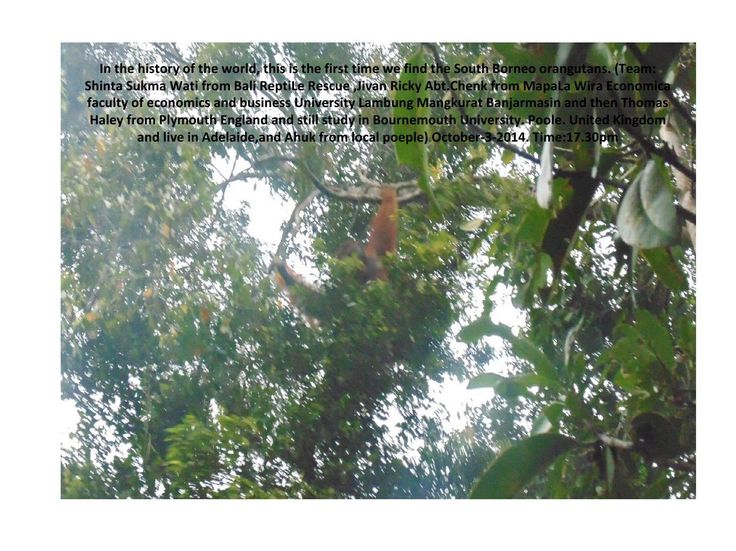 #ClippedOnIssuu from Take picture a third time orangutan south kalimantan by shinta sukmawati