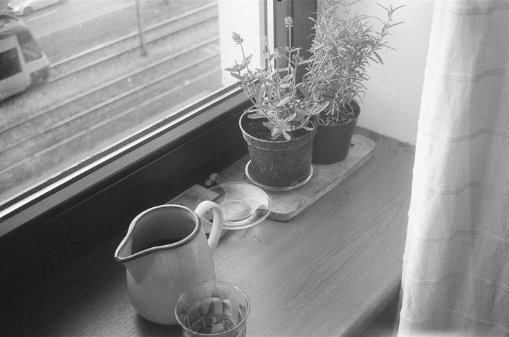 Sylvia's windowsill #ricoh #ricoh500me #analogfeatures #analoguephotography #filmisnotdead #analog #35mm #fotografiaanalogowa #klisza