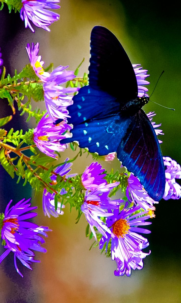 """simply-beautiful-world: """"djferreira224: """" Beautiful nature """" The Colors of Spring """""""