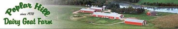 Poplar Hill Dairy Goats, Minnesota