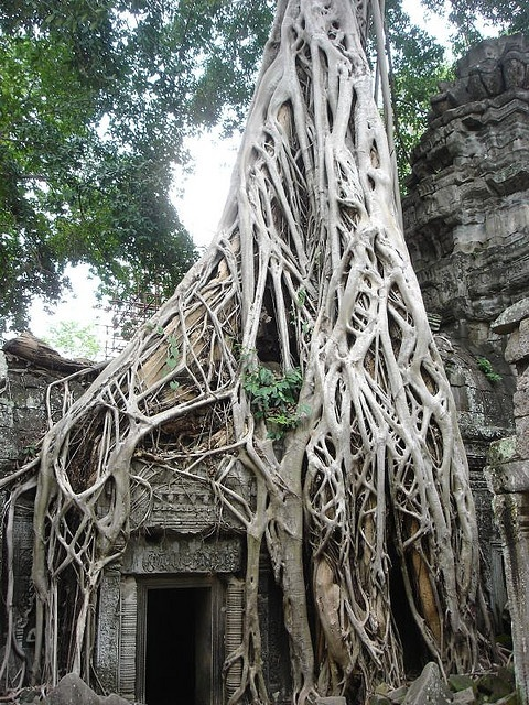 Ta Prohm (Khmer: ប្រាសាទតាព្រហ្ម) is the modern name of a temple at Angkor, Siem Reap Province, Cambodia, built in the Bayon style largely in the late 12th and early 13th centuries and originally called Rajavihara (in Khmer: រាជវិហារ). Located approximately one kilometre east of Angkor Thom and on the southern edge of the East Baray, it was founded by the Khmer King Jayavarman VII as a Mahayana Buddhist monastery and university: Family Photos, Bayon Style, Families Photos
