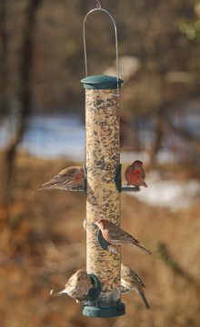 425A Spruce Seed Tube-Large  bird feeder 1.75 quart capacity.with 4 feeding ports. Zinc die-cast top, bottom and feed stations. 2.75in diameter polycarbonate seed tube.