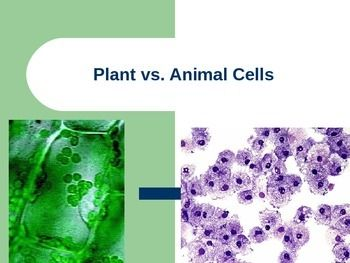 Animal cell vs plant cell under microscope