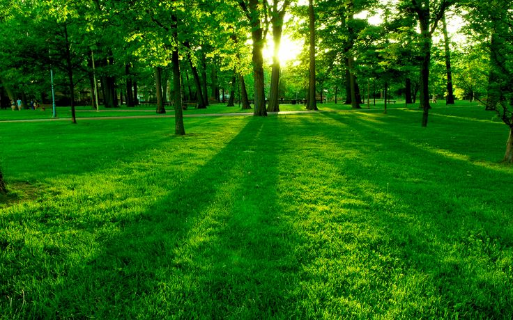 Het beeld wat wij graag terug willen zien in het park van onze wijk. Het straalt als een open plek uit waar veel mensen zullen verzamelen.