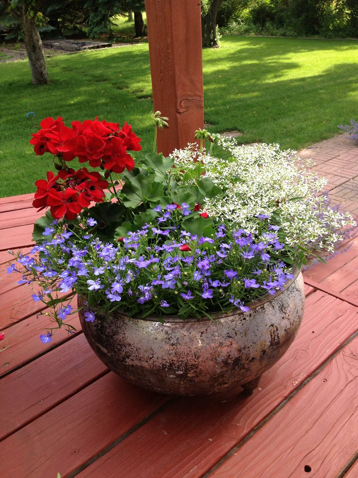 142 Best Red White & Blue Flowers Images On Pinterest
