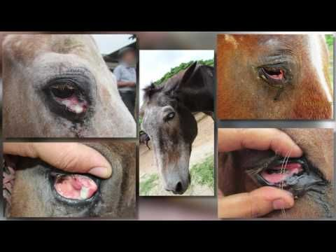 Urge India to Close Facilities That Drain Blood From Horses and Donkeys | Take Action | PETA.org.uk - 1