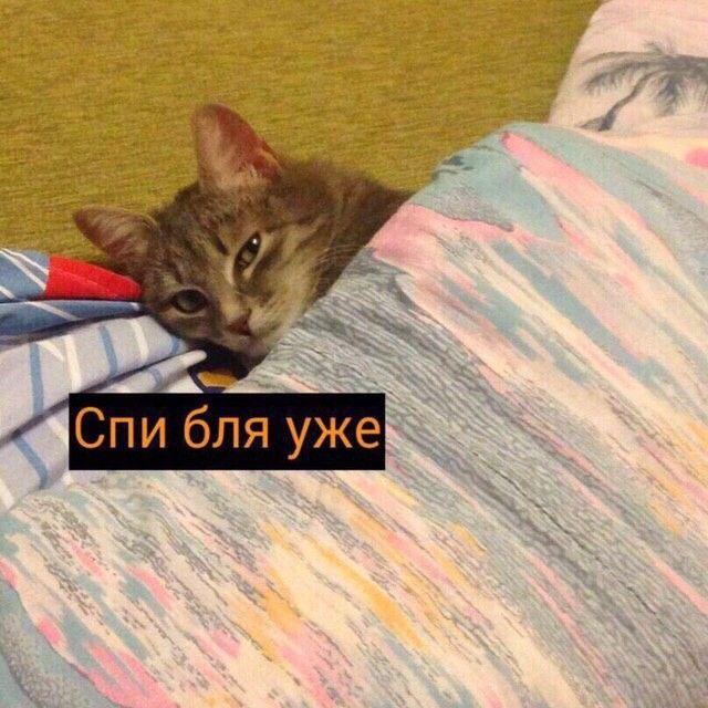 Картинка спокойной ночи с котиком мем