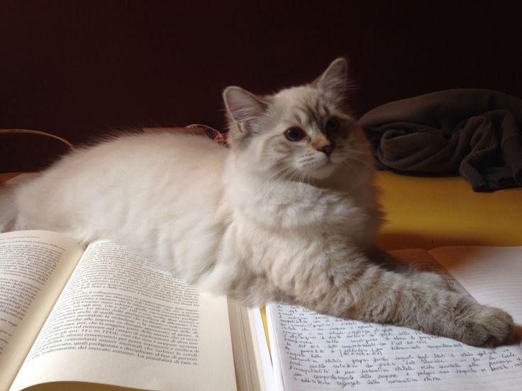 I won't let you study