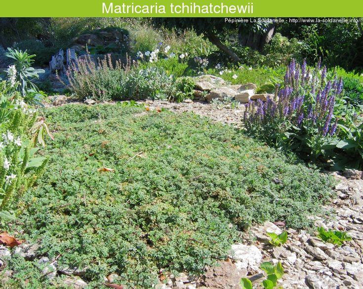 Les 25 meilleures id es concernant couvre sol persistant sur pinterest couvre plante - Phlox vivace couvre sol ...