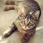 Tips to buy pet supplies online