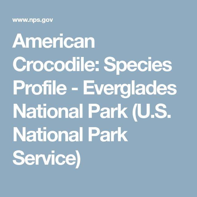 American Crocodile: Species Profile - Everglades National Park (U.S. National Park Service)